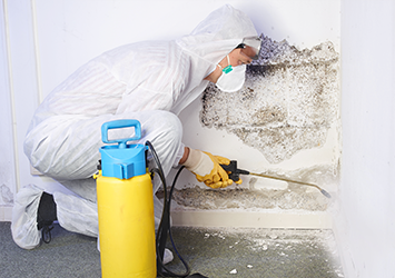 Complete Detail mold remediation service