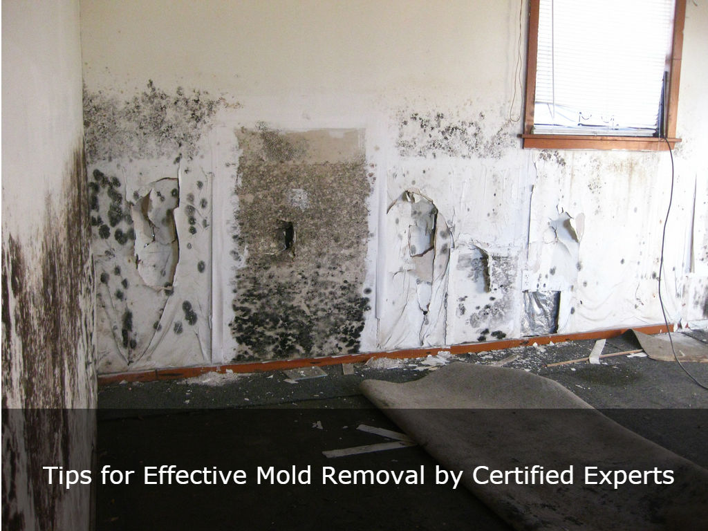 Tips for Effective Mold Removal by Certified Experts